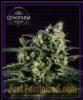 Genofarm Easy Haze Female 10 Cannabis Seeds